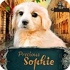 Precious Sophie игра